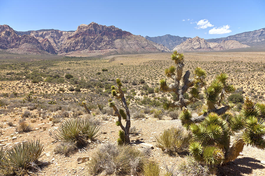 Red Rock Canyon Landscape Nevada. Photograph