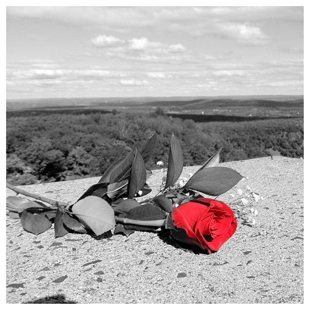 Red Photograph - Red Rose Version 2  by Stephen Melcher