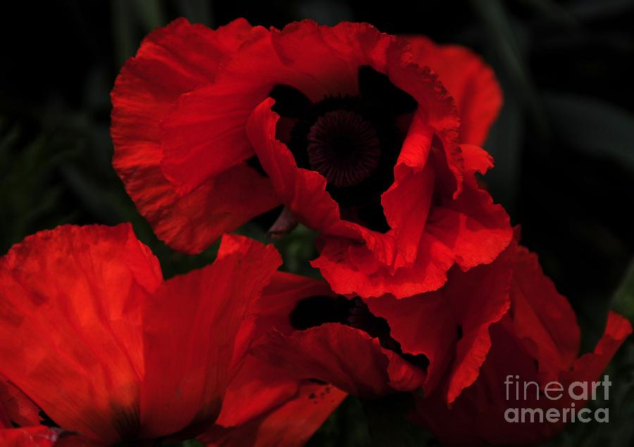 Red Ruffles Photograph  - Red Ruffles Fine Art Print