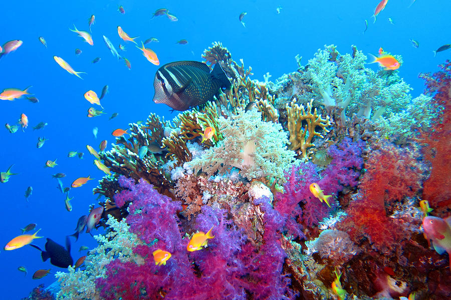 Red Sea Colours Photograph