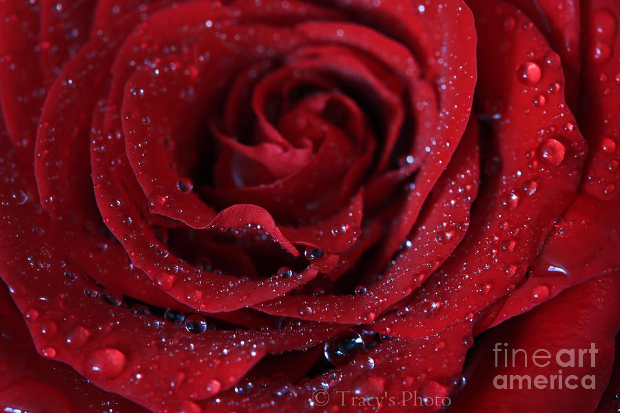 Drops Photograph - Red Sparkle by Tracy  Hall