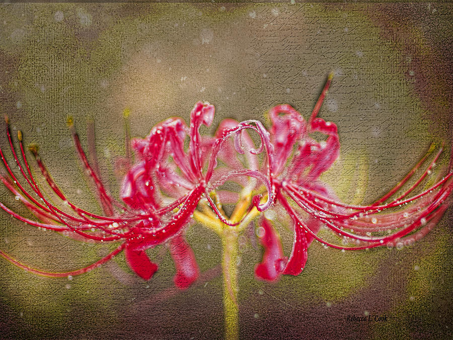 Red Spider Lily In Rain Photograph by Bellesouth Studio