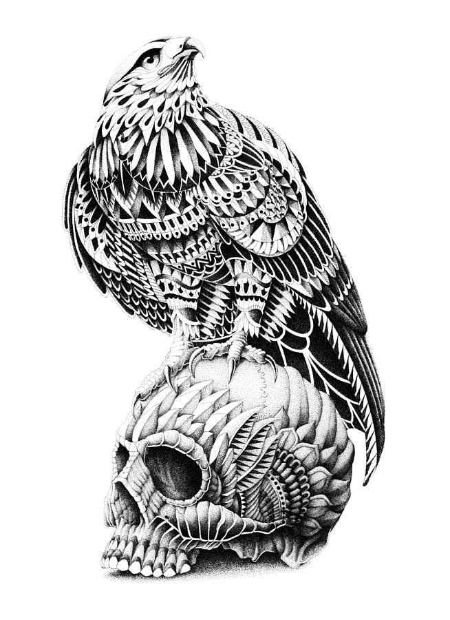 Red-tail Skull Drawing