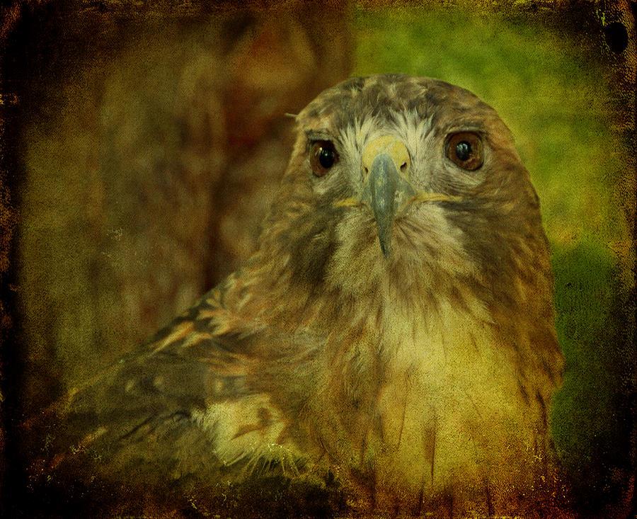Hawk Photograph - Red-tailed Hawk II by Sandy Keeton