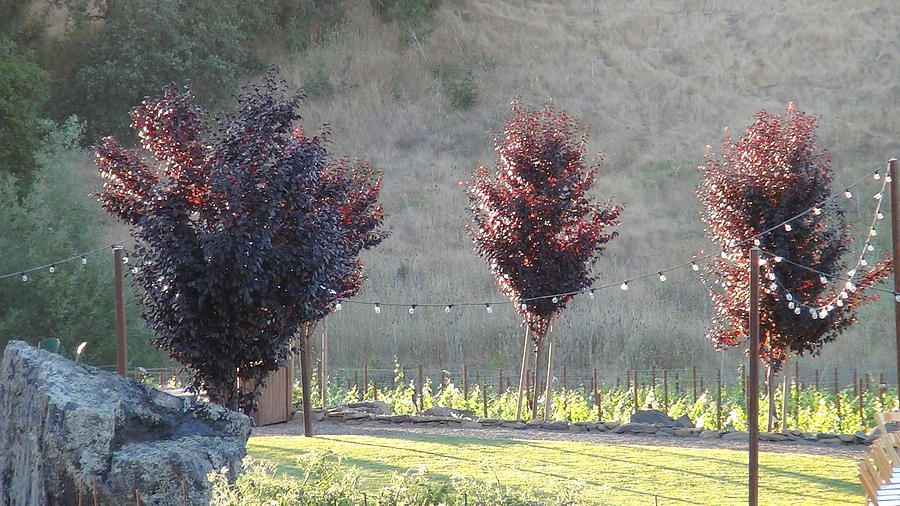 Red Trees Photograph