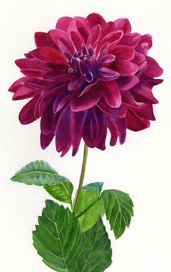 Red Violet Dahlia Blossom Painting