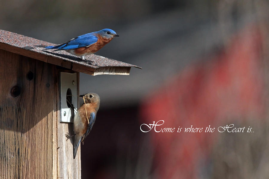 Red White And Blue Birds Photograph  - Red White And Blue Birds Fine Art Print