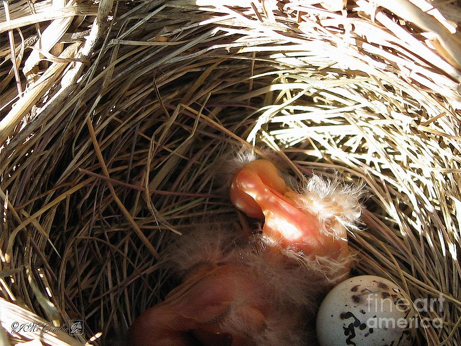 Red-winged Blackbird Babies And Egg Painting