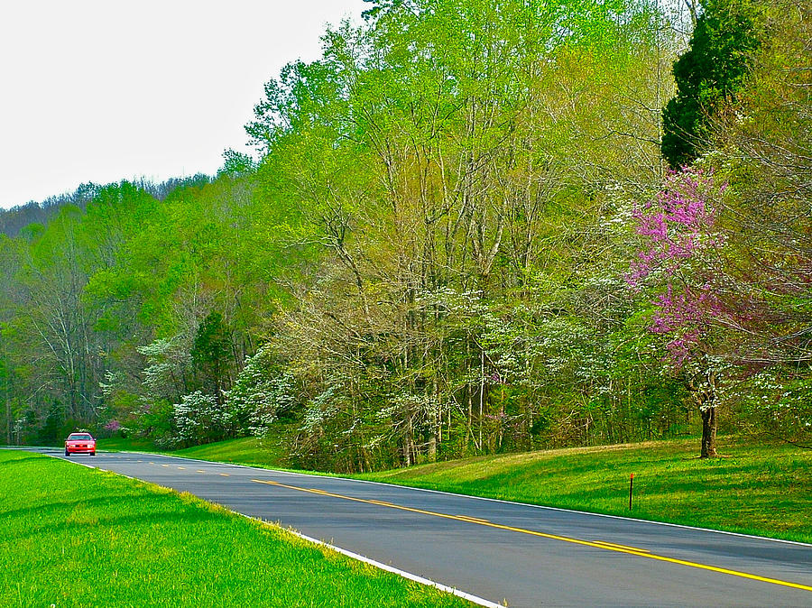 Redbud And Dogwood In Spring At Mile 363 Of Natchez Trace Parkway-tn Photograph
