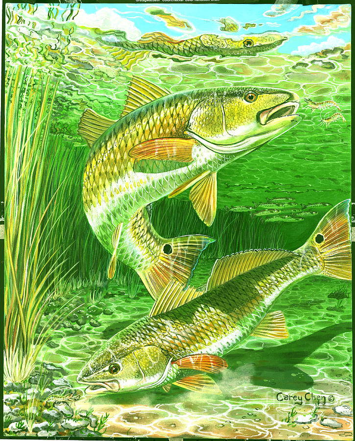Redfish Haven In0018 Painting
