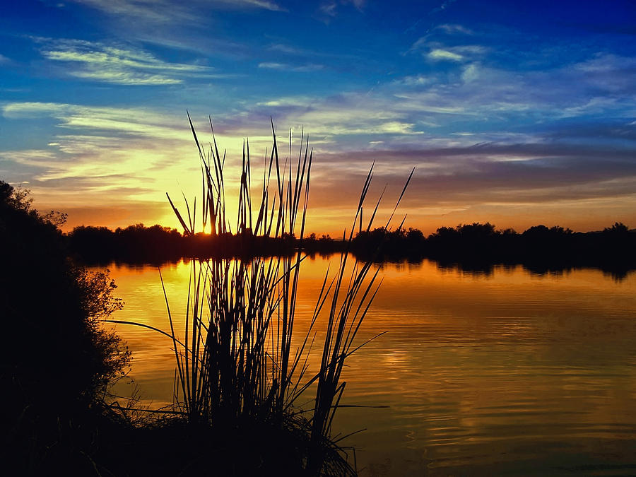 Reeds In Lake Sunset Photograph  - Reeds In Lake Sunset Fine Art Print