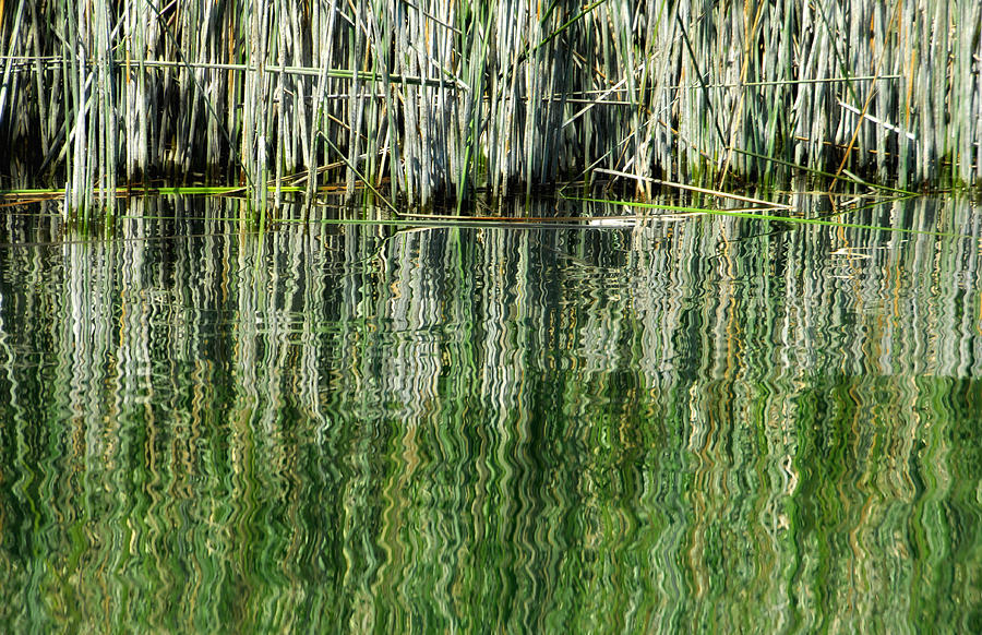 Reflecting Back Photograph  - Reflecting Back Fine Art Print
