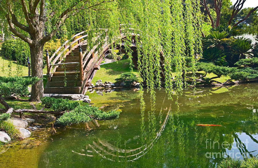 Reflection japanese garden with moon bridge and lotus for Japanese garden fish