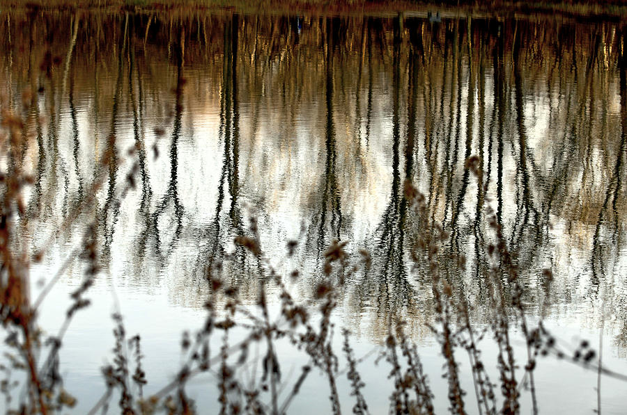 Water Photograph - Reflections by Joanne Beebe