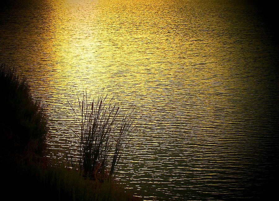 Reflections Of Gold Photograph  - Reflections Of Gold Fine Art Print