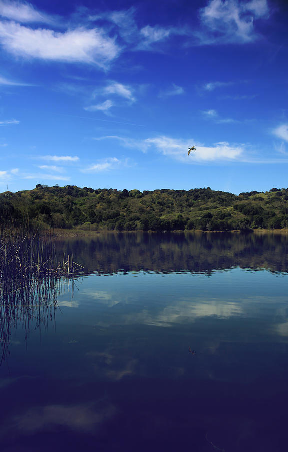 Lafayette Reservoir Recreation Area Photograph - Regardless Of The Blues by Laurie Search