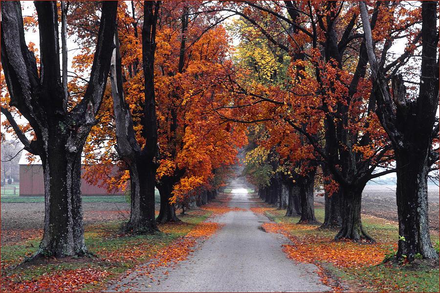 Reids Orchard Drive Photograph
