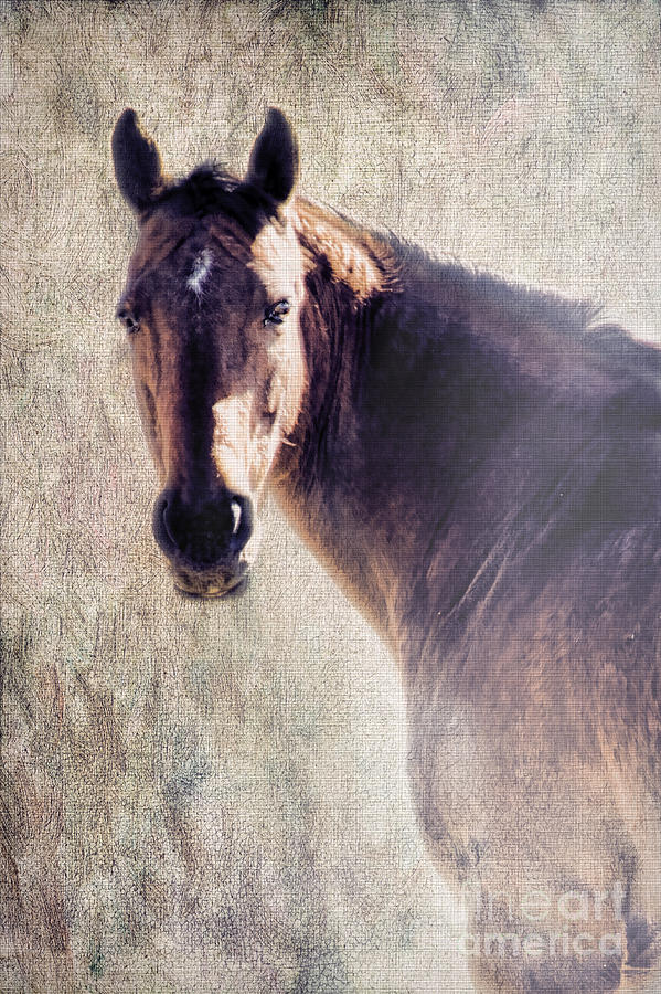 Horse Photograph - Reliability by Betty LaRue