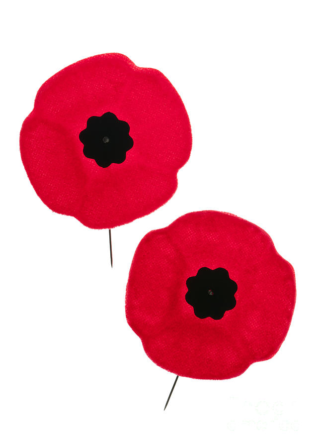 Remembrance Day Poppies Photograph