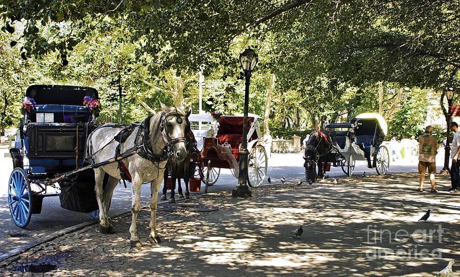 Horses Photograph - Rest Stop - Central Park by Madeline Ellis