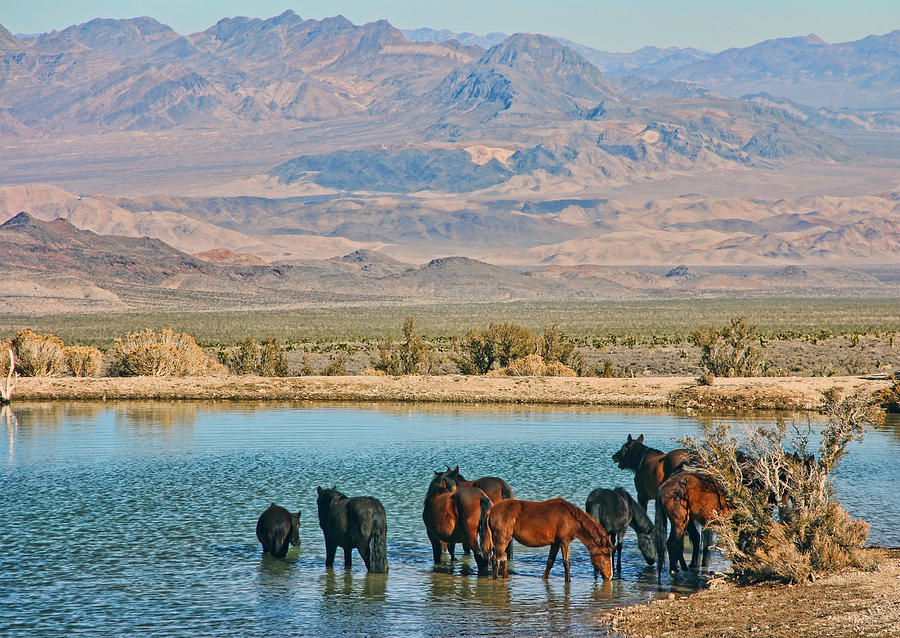 Horse Photograph - Rest Stop by Tammy Espino