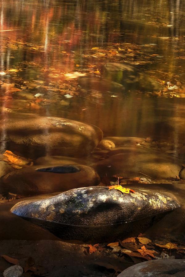 Resting Leaf Photograph