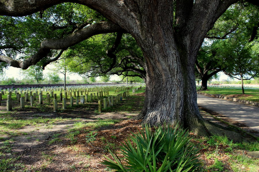 Resting In The Shade Photograph  - Resting In The Shade Fine Art Print