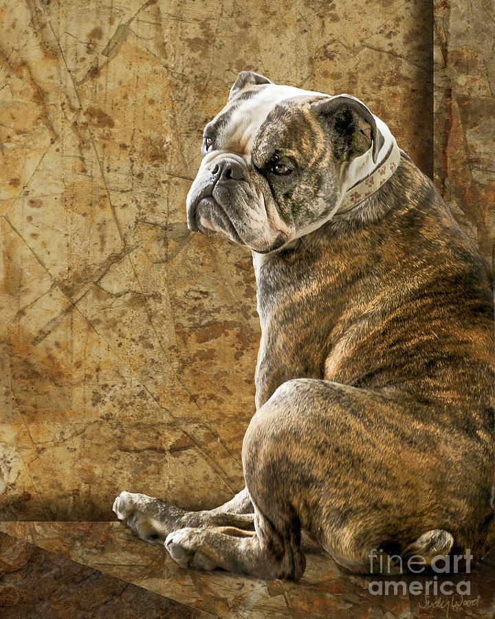 English Bulldog Digital Art - Resting Place by Judy Wood
