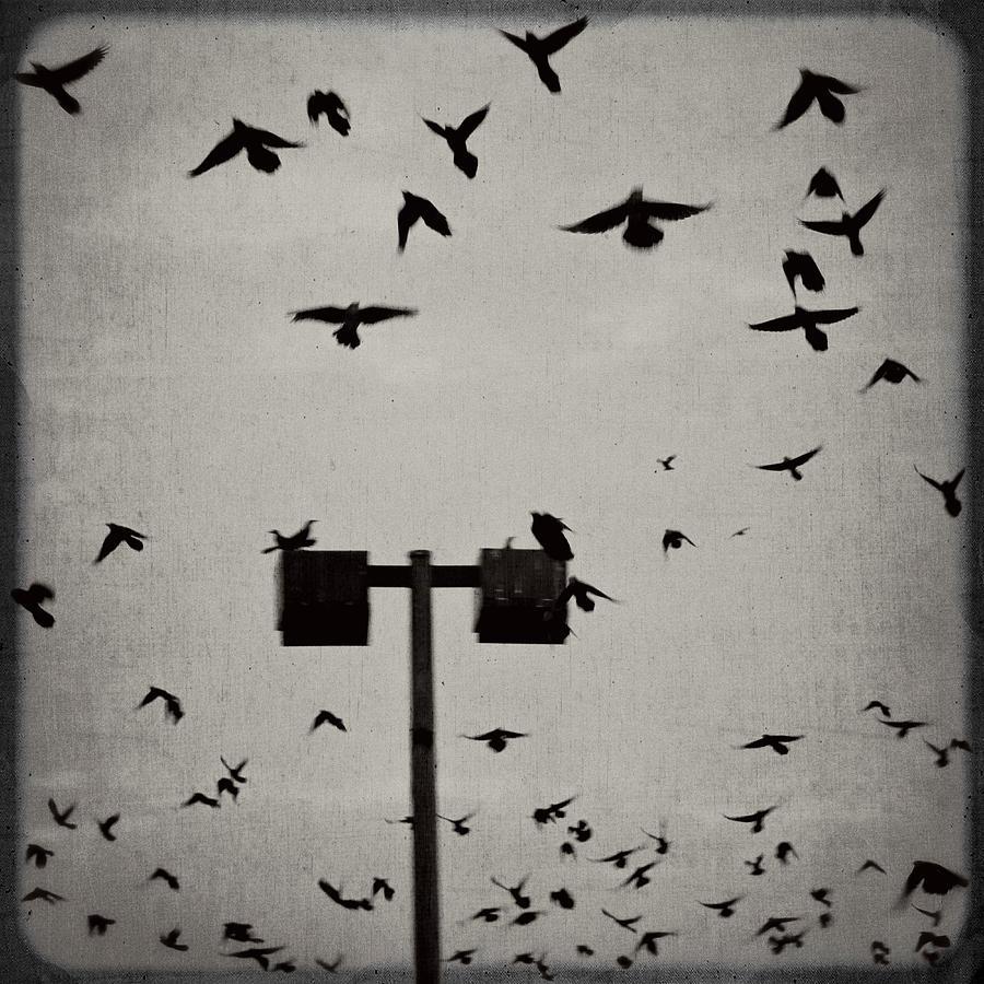 Texture Photograph - Revenge Of The Birds by Trish Mistric