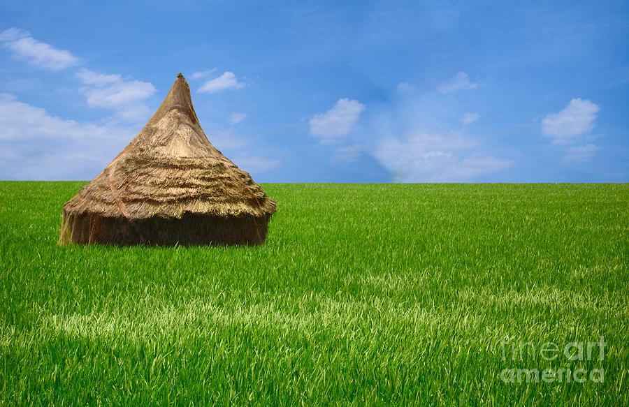 Rice Farming Photograph