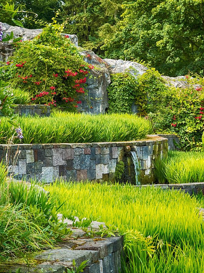Rice Garden Photograph