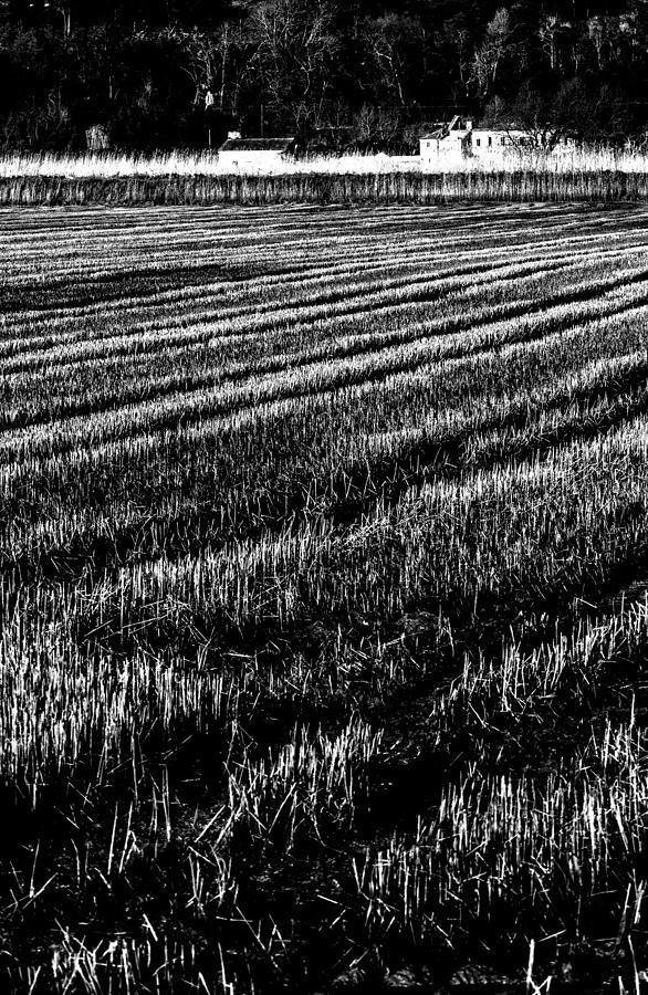 Rice Paddies Photograph - Rice Paddies by Edgar Laureano