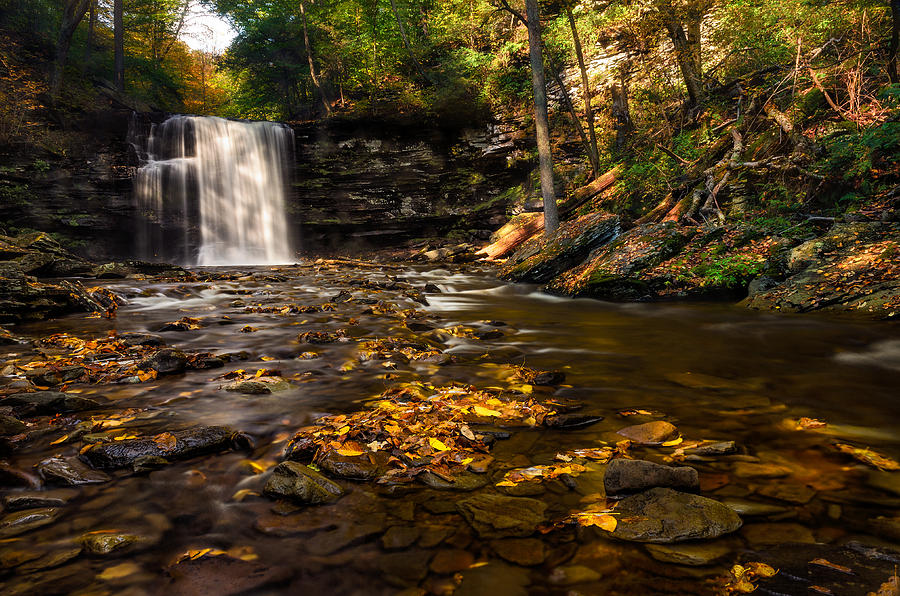 Ricketts Glen  Murray Reynolds Photograph  - Ricketts Glen  Murray Reynolds Fine Art Print