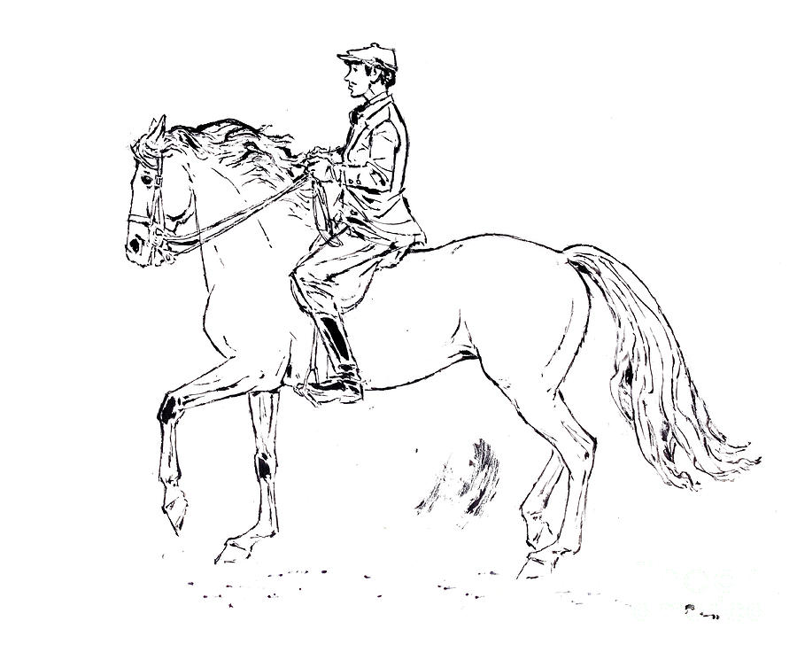 White Mustang Horse Drawing Rider on Mustang Horse Drawing