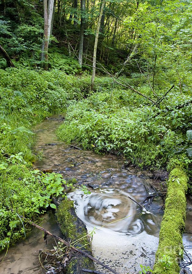 Ridgeway Creek Photograph