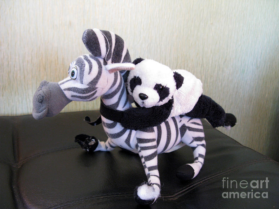 Riding A Zebra Traveling Pandas Series Photograph By Ausra