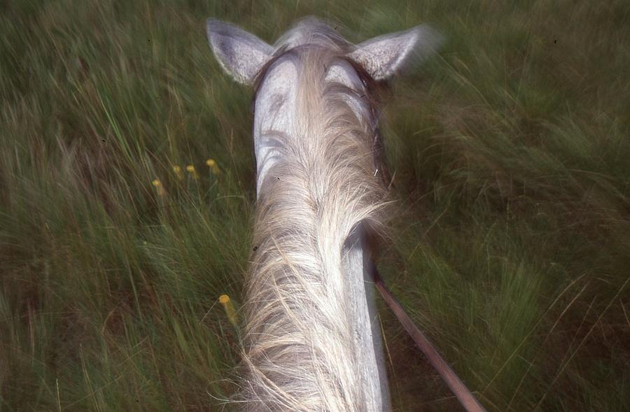 Riding In Zululand Photograph  - Riding In Zululand Fine Art Print