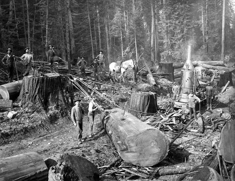 Logging Tour In Oregon