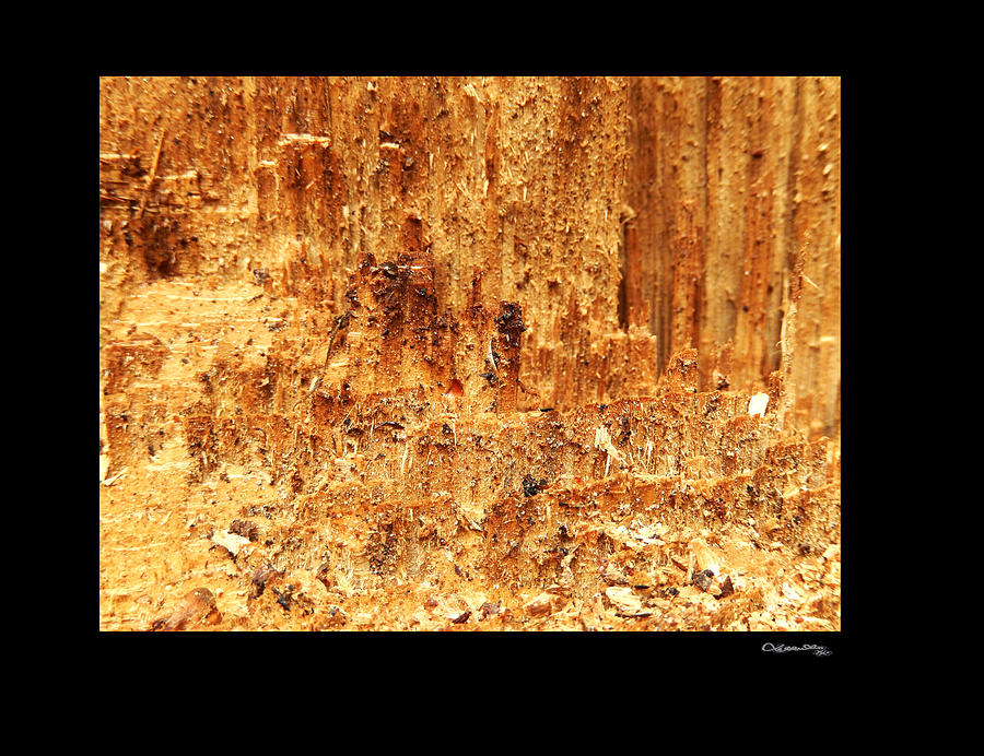 Ripped 3 Photograph  - Ripped 3 Fine Art Print