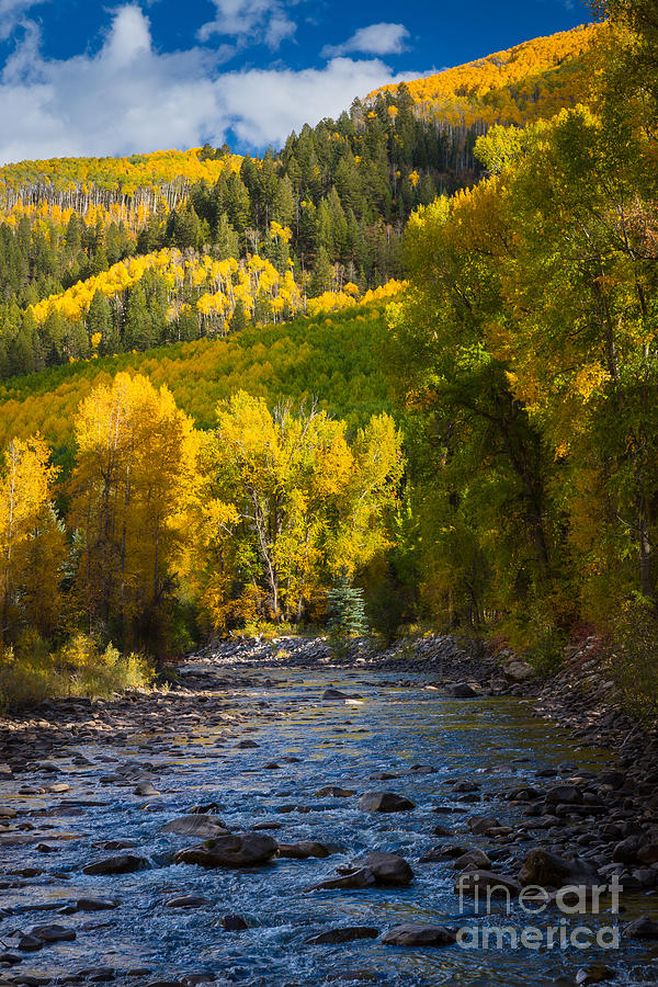 River And Aspens Photograph  - River And Aspens Fine Art Print
