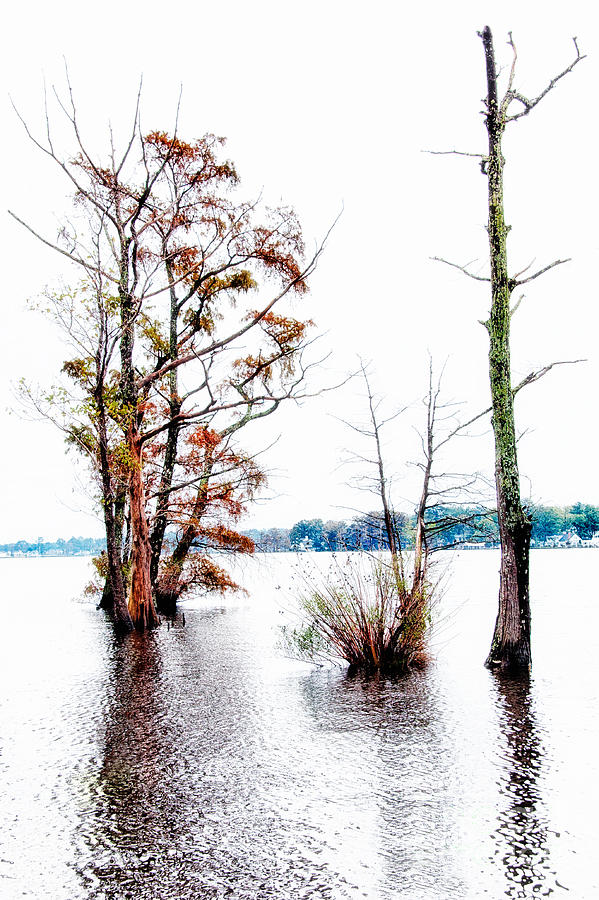 River Trees - Elizabeth City Nc Painting