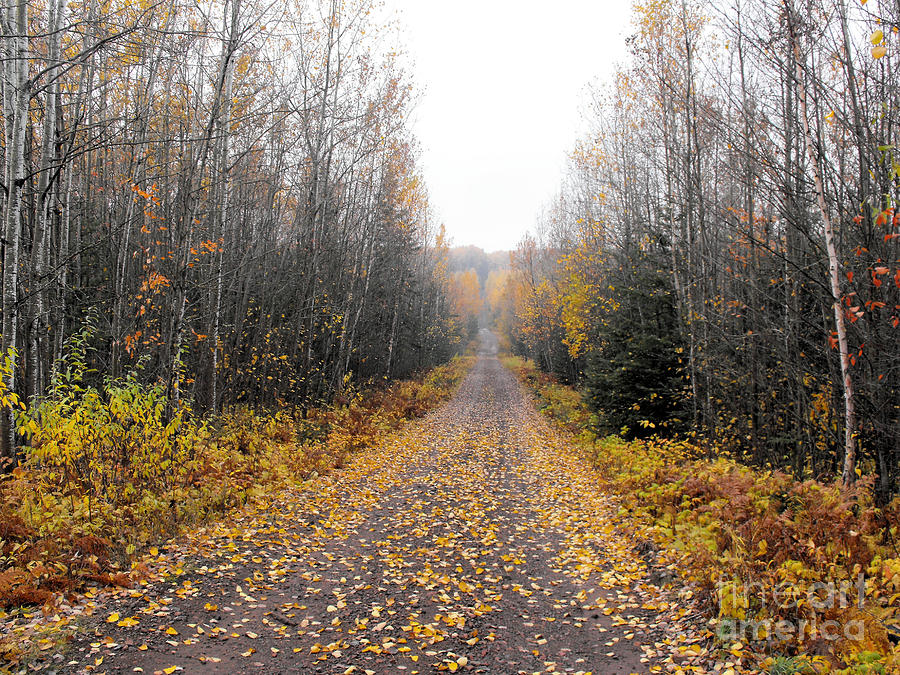 Road To The Cabin Photograph  - Road To The Cabin Fine Art Print