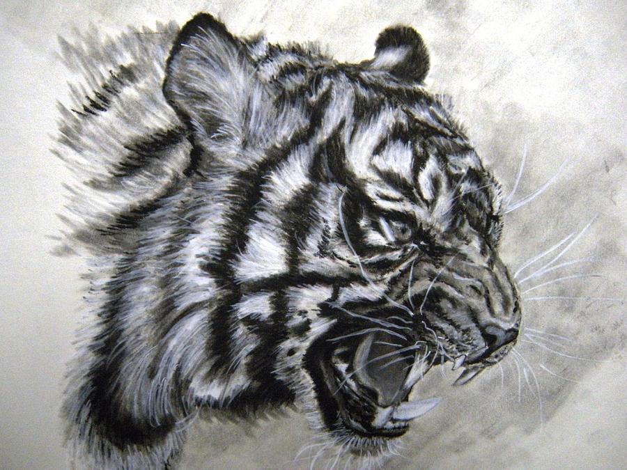 Roaring Tiger Drawing by Lori Ippolito
