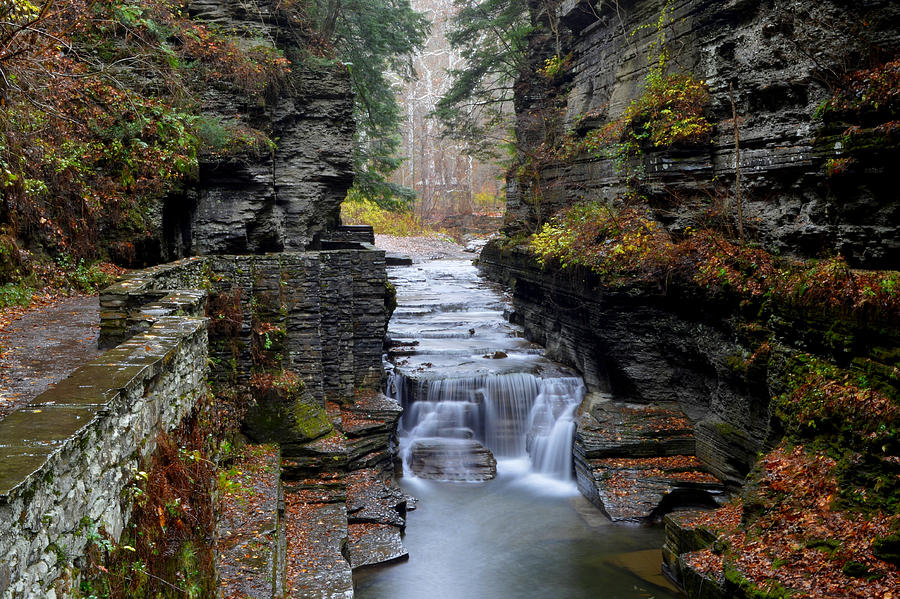 Robert Treman State Park Photograph