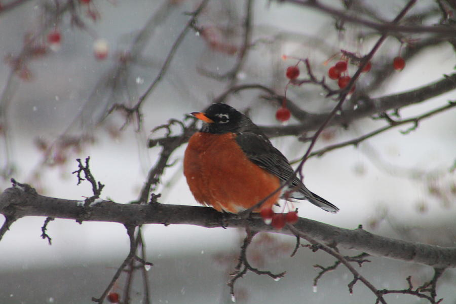 Robin Winter Photograph  - Robin Winter Fine Art Print