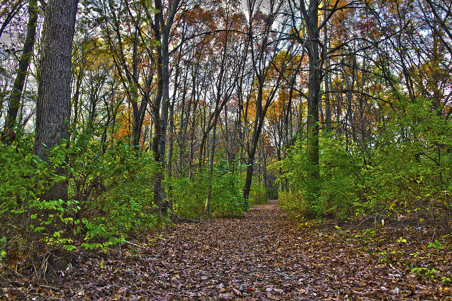 Rock Cut Path 2 Photograph  - Rock Cut Path 2 Fine Art Print