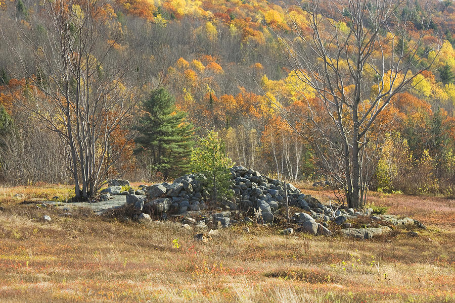 Rock Pile In Maine Blueberry Field Photograph