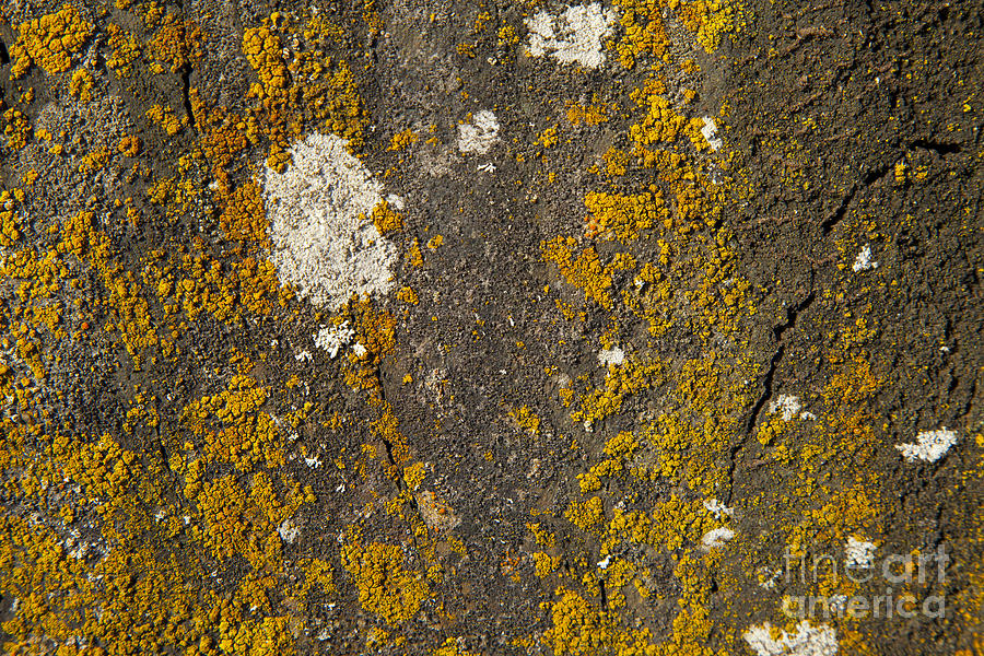 Rock With Lichen Photograph  - Rock With Lichen Fine Art Print
