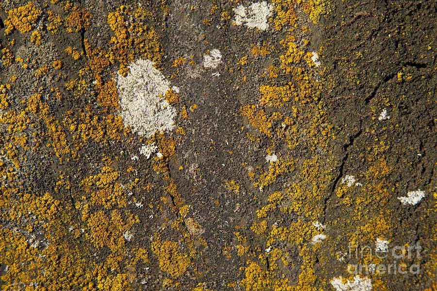 Rock With Lichen Photograph