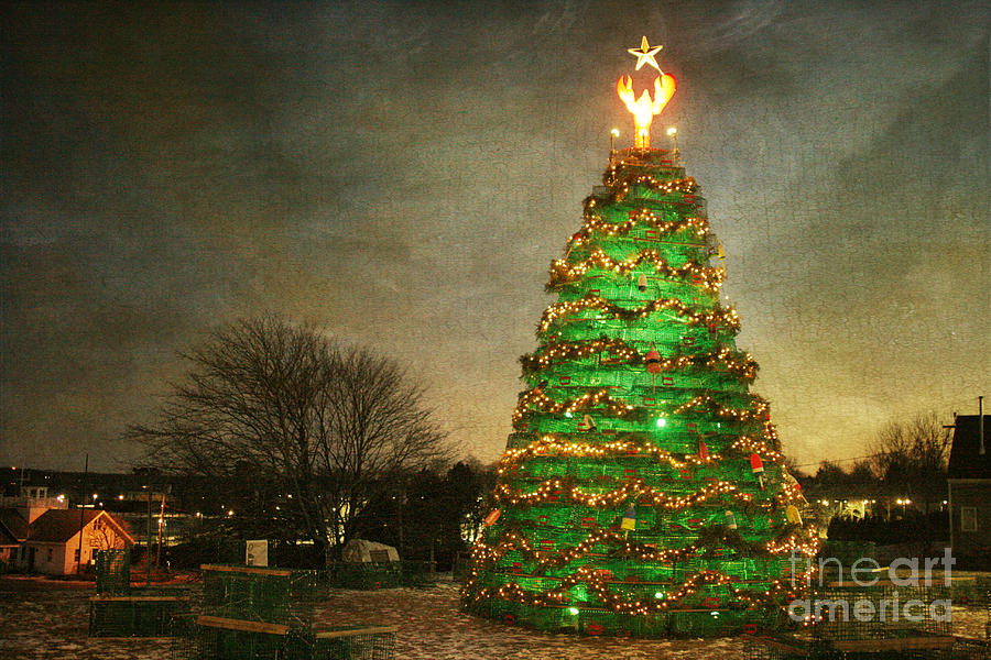Rockland Lobster Trap Christmas Tree Photograph by Cindi Ressler